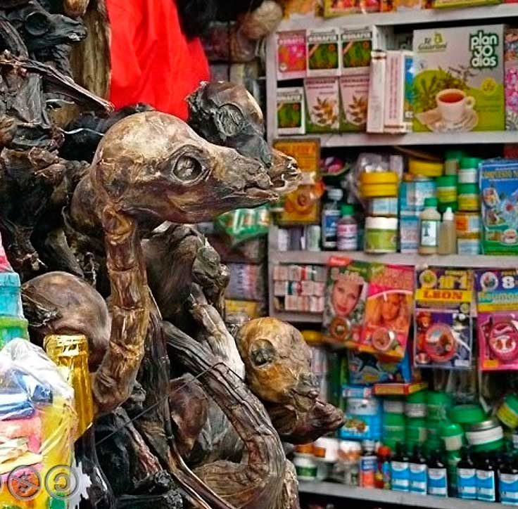 Dried llamas in Witches Market